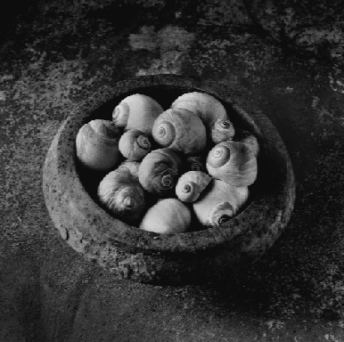 BOWL OF SNAILS